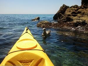 Kayak Maro - Rutas y alquiler de kayak y tabla